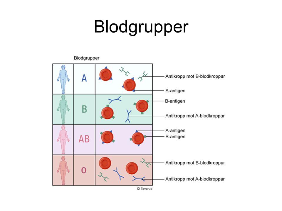 Blodgrupper