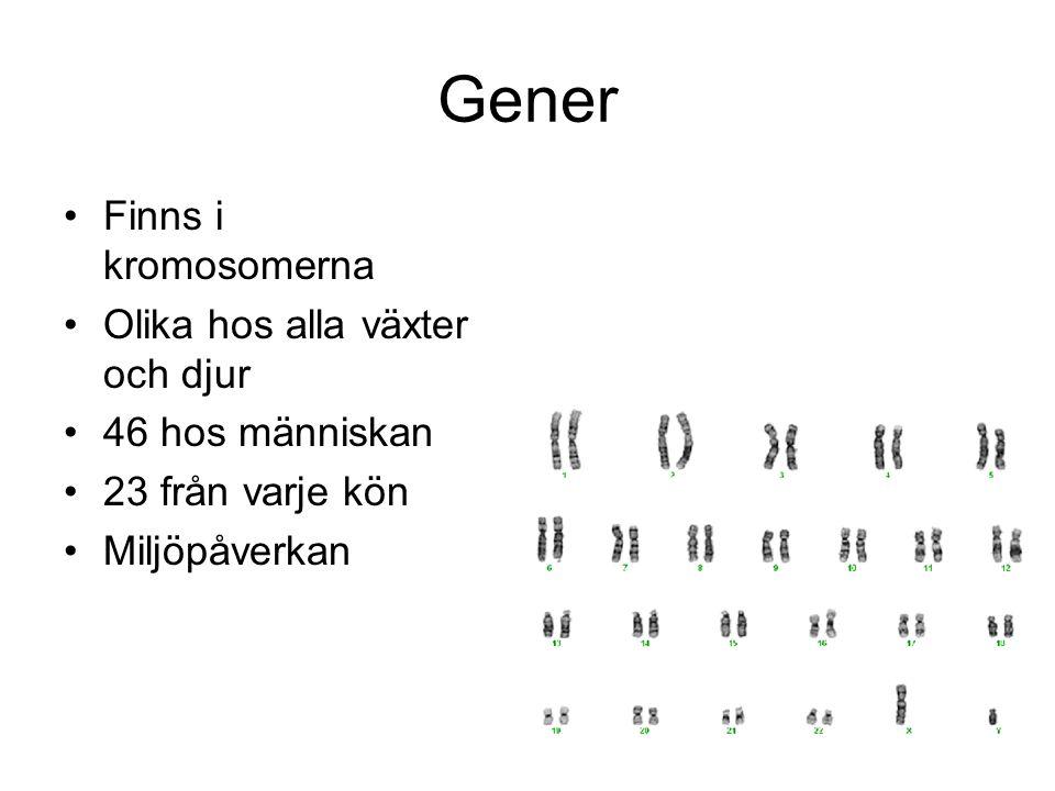 Gener Finns i kromosomerna Olika hos alla växter och djur 46 hos människan 23 från varje kön Miljöpåverkan