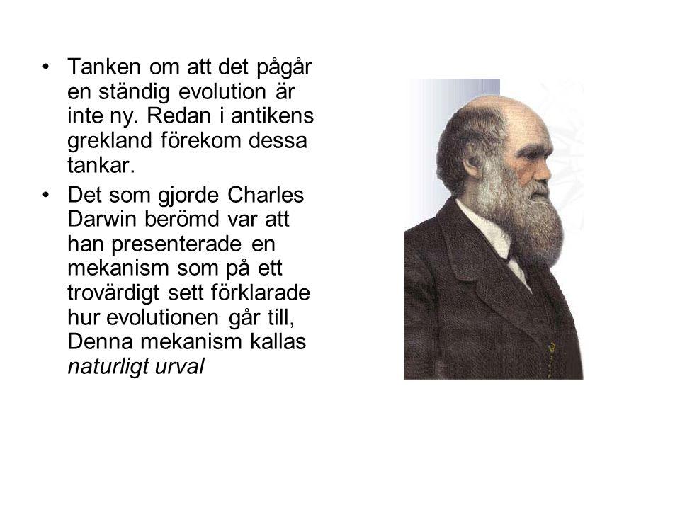 Tanken om att det pågår en ständig evolution är inte ny. Redan i antikens grekland förekom dessa tankar. Det som gjorde Charles Darwin berömd var att
