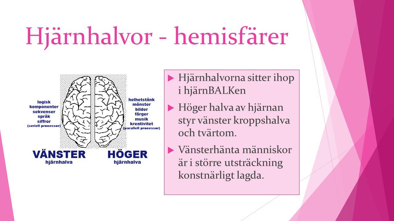 Hjärnhalvor - hemisfärer  Hjärnhalvorna sitter ihop i hjärnBALKen  Höger halva av hjärnan styr vänster kroppshalva och tvärtom.  Vänsterhänta männi
