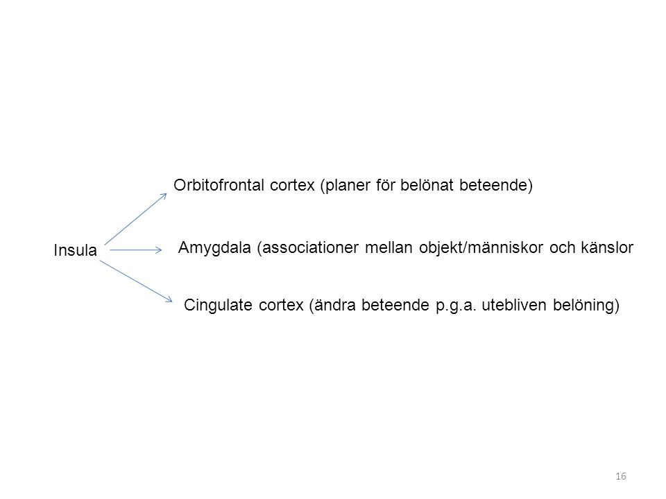 Insula Orbitofrontal cortex (planer för belönat beteende) Amygdala (associationer mellan objekt/människor och känslor Cingulate cortex (ändra beteende