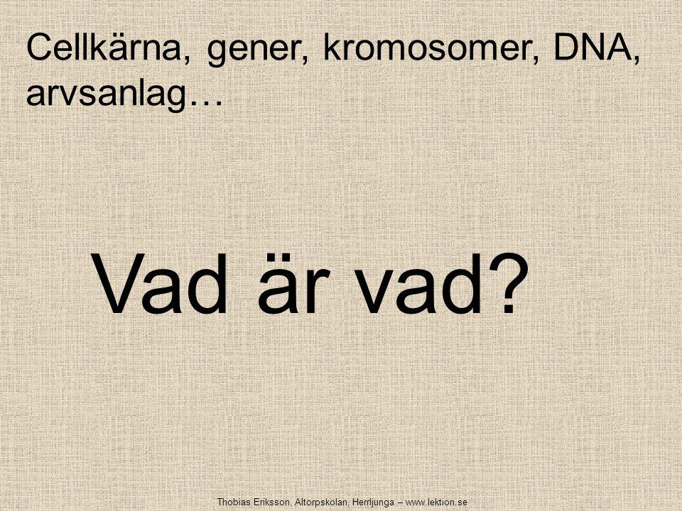 Cellkärna, gener, kromosomer, DNA, arvsanlag… Vad är vad? Thobias Eriksson, Altorpskolan, Herrljunga – www.lektion.se