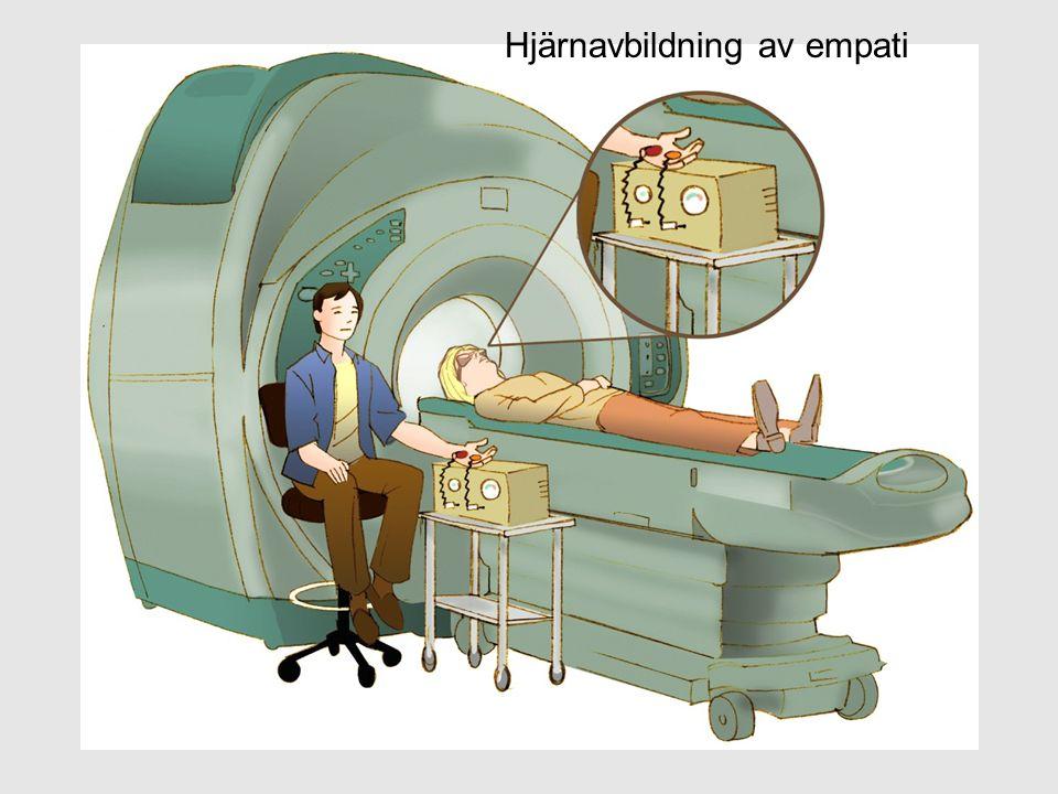 Hjärnavbildning av empati
