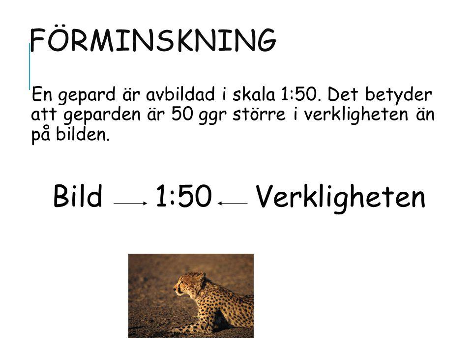 FÖRMINSKNING En gepard är avbildad i skala 1:50.