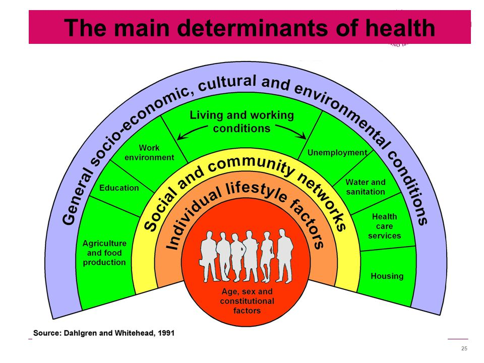 25 The main determinants of health
