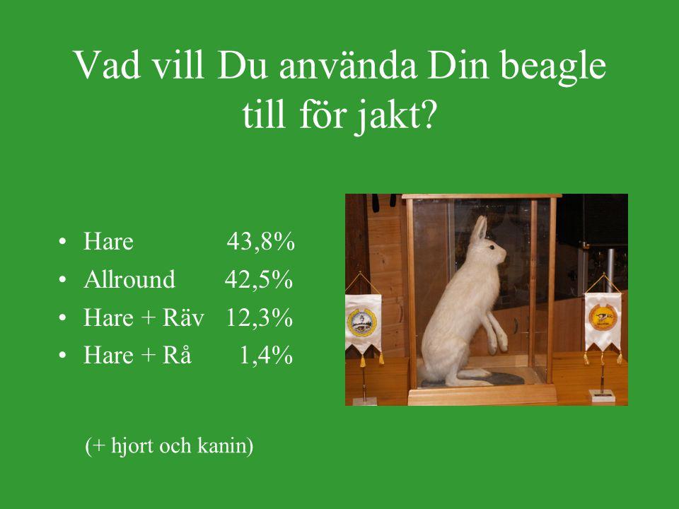 SBlK:s Uppfödarenkät Intresseinriktningar bland uppfödarna Enbart jakt 26,0% Jakt och utställning 71,2% Enbart utställning 2,7% (Se även fråga 12: Vilka egenskaper ser Du ffa till i aveln.