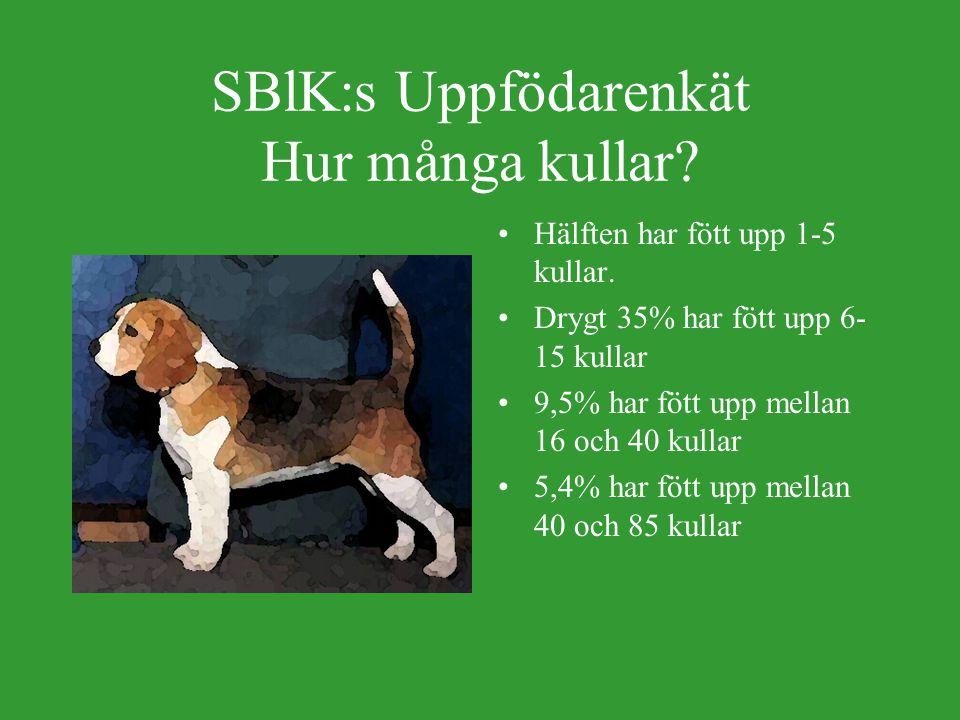 SBlK:s Uppfödarenkät Hur många kullar.Hälften har fött upp 1-5 kullar.