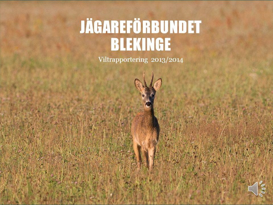 JÄGAREFÖRBUNDET BLEKINGE Viltrapportering 2013/2014