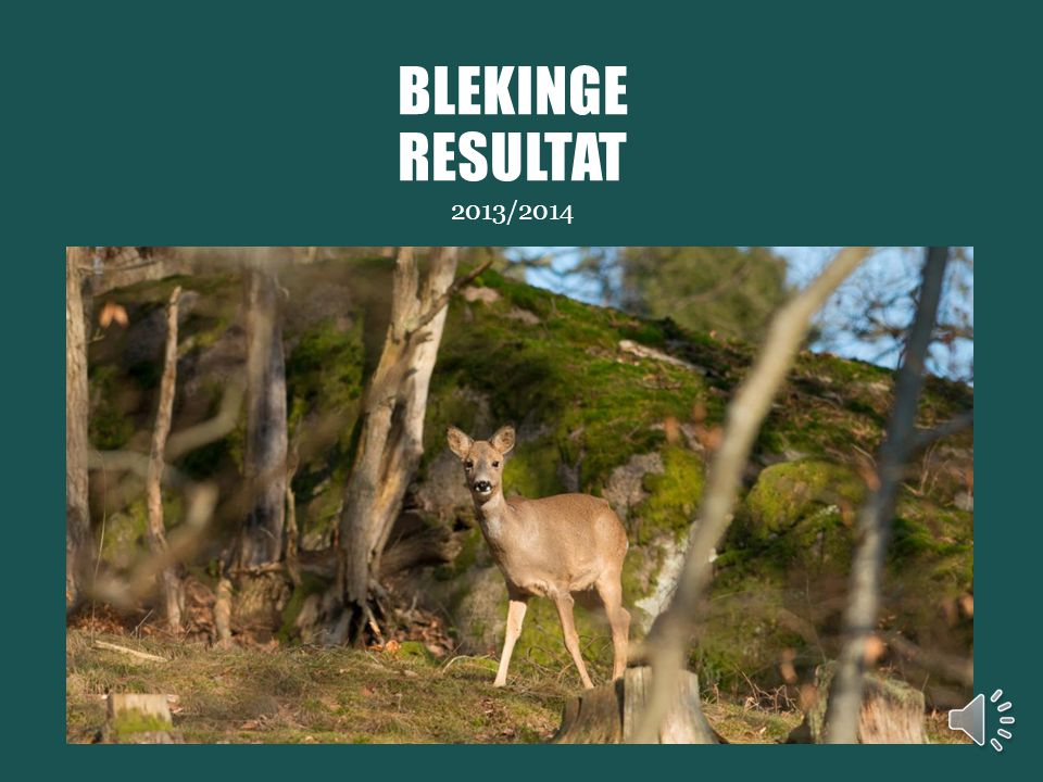 Avskjutning Vildsvin 2000 - 2013 BLEKINGE