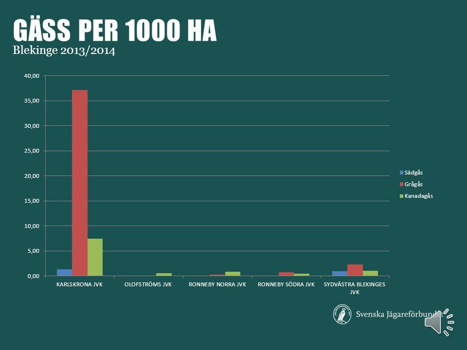 GNAGARE PER 1000 HA Blekinge 2013/2014