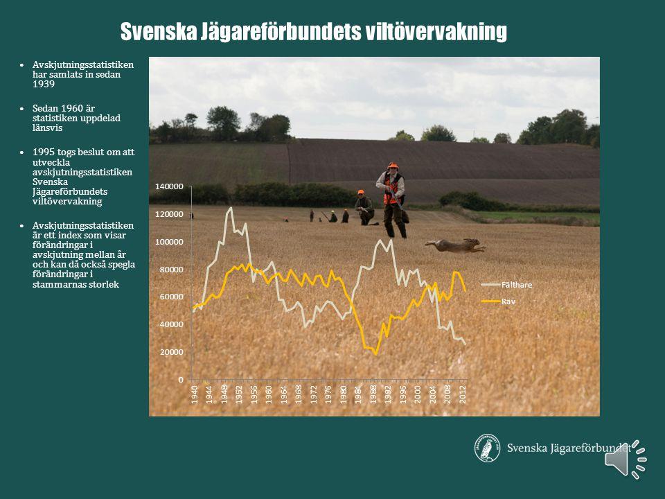 Avskjutningsstatistiken har samlats in sedan 1939 Sedan 1960 är statistiken uppdelad länsvis 1995 togs beslut om att utveckla avskjutningsstatistiken Svenska Jägareförbundets viltövervakning Avskjutningsstatistiken är ett index som visar förändringar i avskjutning mellan år och kan då också spegla förändringar i stammarnas storlek Svenska Jägareförbundets viltövervakning