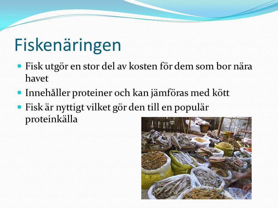Fiskenäringen Fisk utgör en stor del av kosten för dem som bor nära havet Innehåller proteiner och kan jämföras med kött Fisk är nyttigt vilket gör de