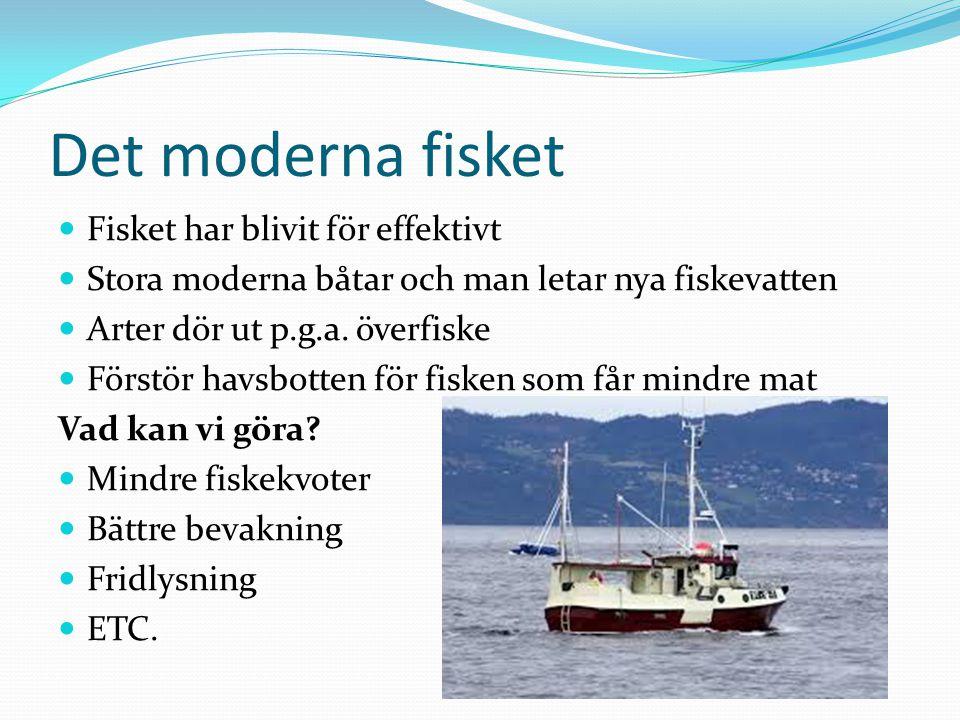 Det moderna fisket Fisket har blivit för effektivt Stora moderna båtar och man letar nya fiskevatten Arter dör ut p.g.a. överfiske Förstör havsbotten