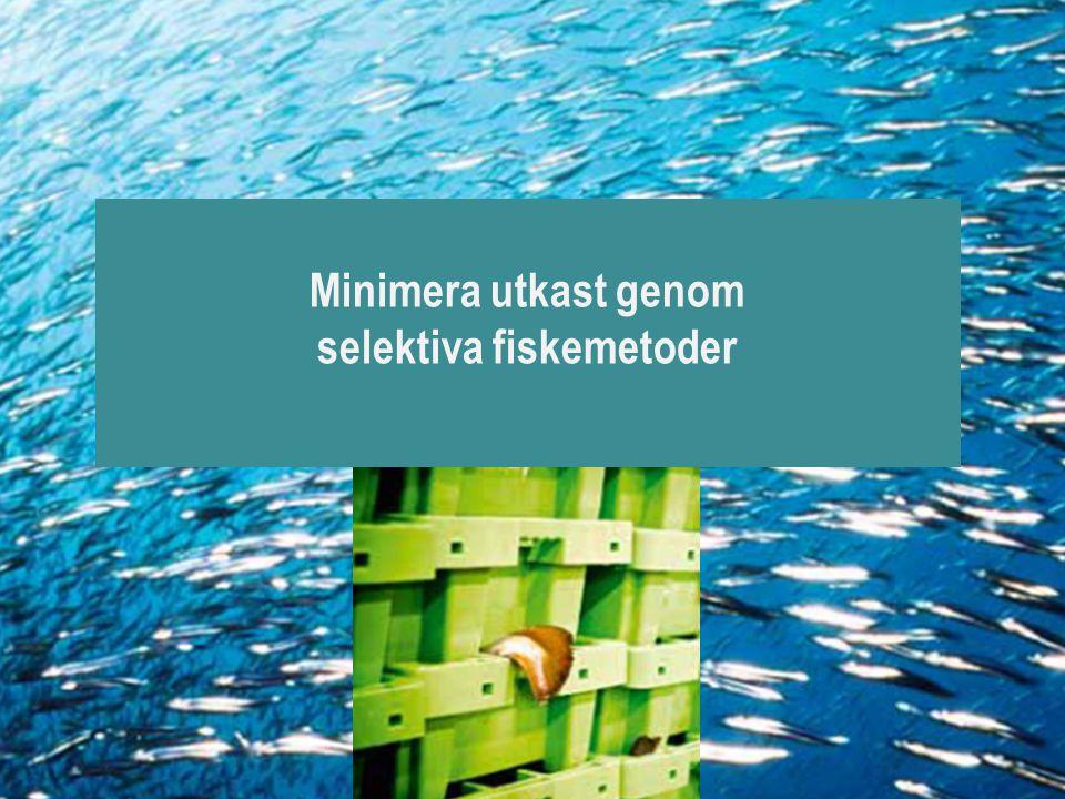 Minimera utkast genom selektiva fiskemetoder