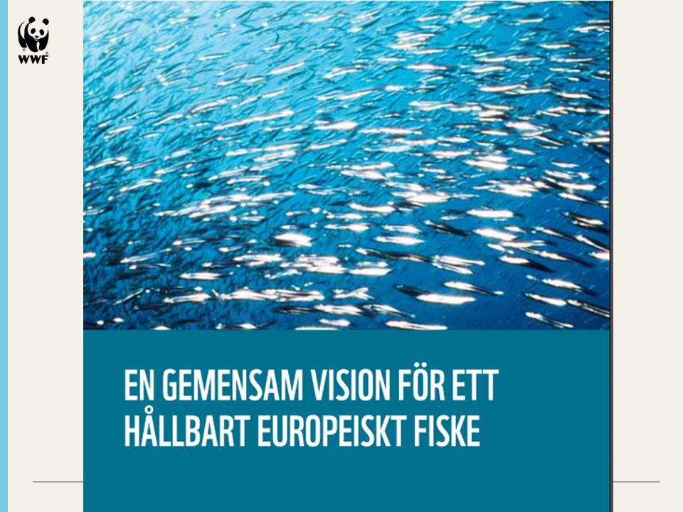 Alliansen för en gemensam fiskeripolitik AIPCE-CEP www.aipce-cep.orgwww.aipce-cep.org EUROCOMMERCE www.eurocommerce.bewww.eurocommerce.be EURO COOP www.eurocoop.coopwww.eurocoop.coop EURO-TOQUESINTERNATIONAL www.euro-toques.orgwww.euro-toques.org VÄRLDSNATURFONDEN WWF ww.wwf.euww.wwf.eu
