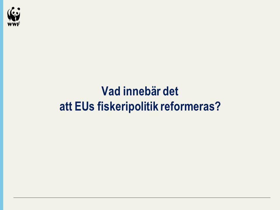 Vad innebär det att EUs fiskeripolitik reformeras
