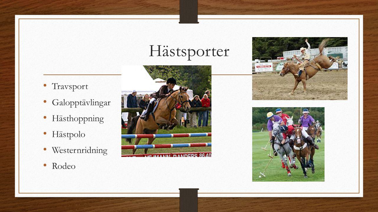 Hästsporter Travsport Galopptävlingar Hästhoppning Hästpolo Westernridning Rodeo