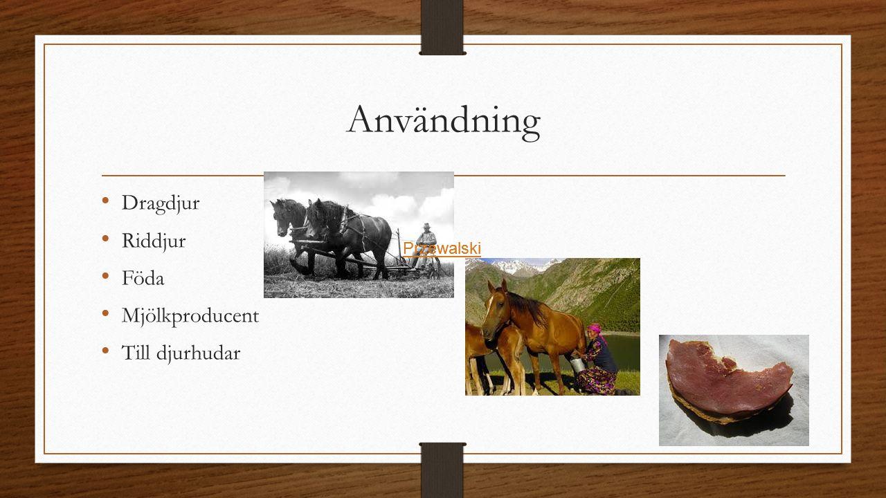 Användning Dragdjur Riddjur Föda Mjölkproducent Till djurhudar Przewalski