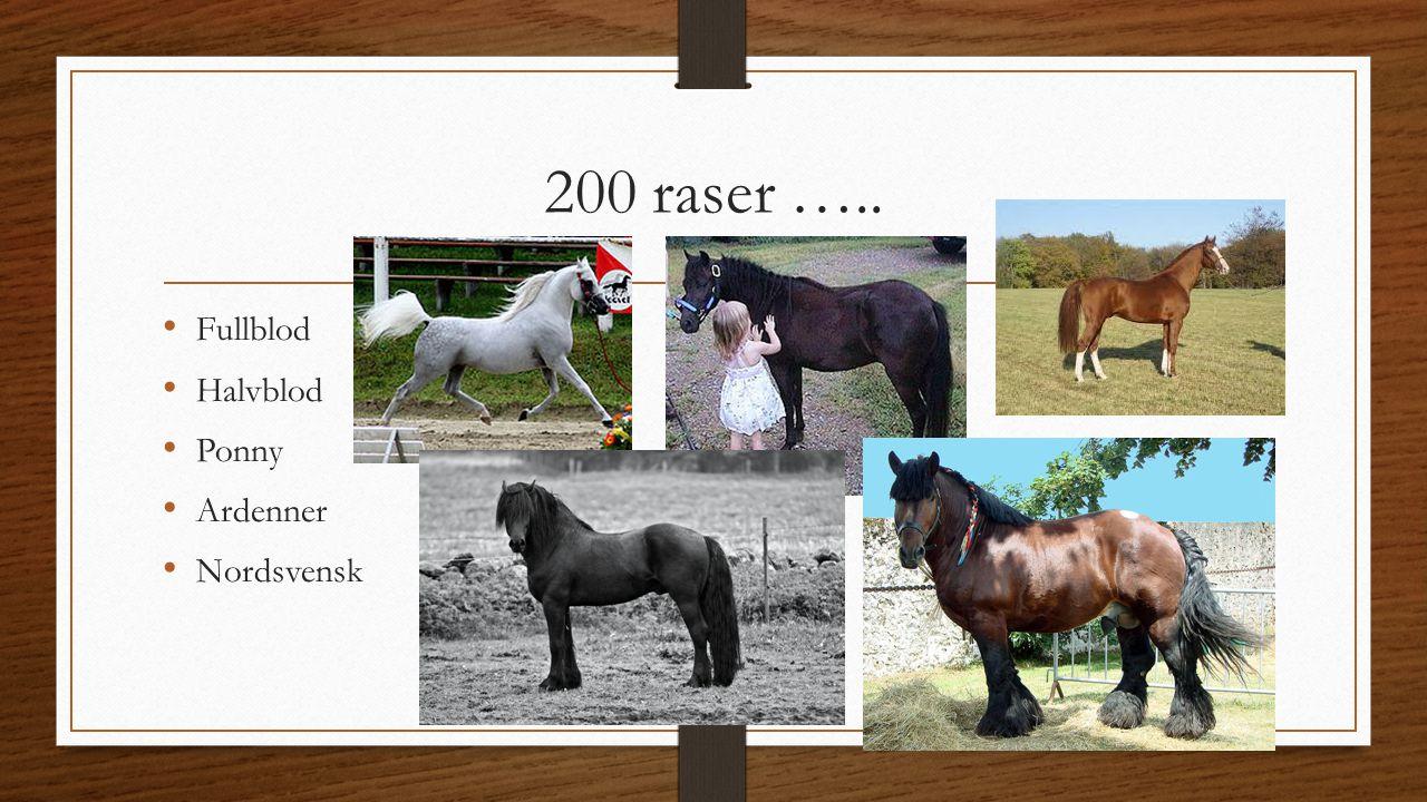 200 raser ….. Fullblod Halvblod Ponny Ardenner Nordsvensk
