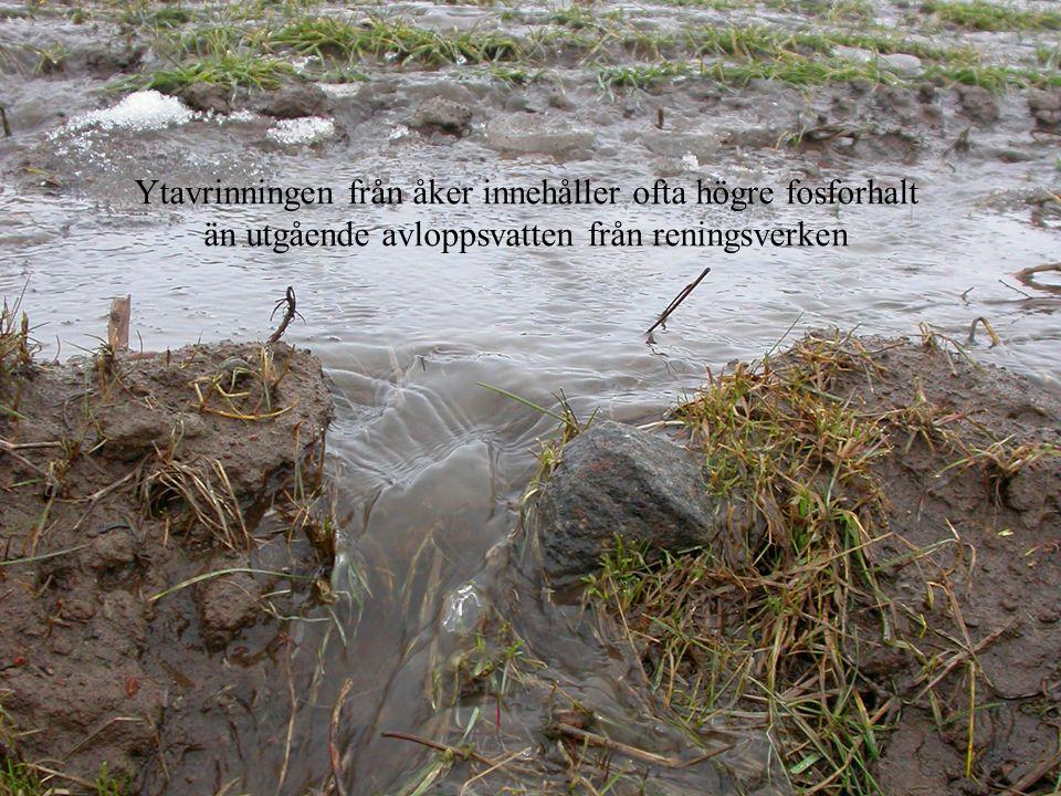 Ytavrinning stor Ytavrinningen från åker innehåller ofta högre fosforhalt än utgående avloppsvatten från reningsverken