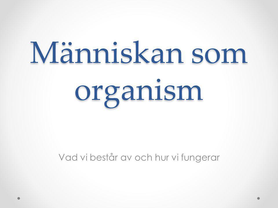 Människan som organism Vad vi består av och hur vi fungerar