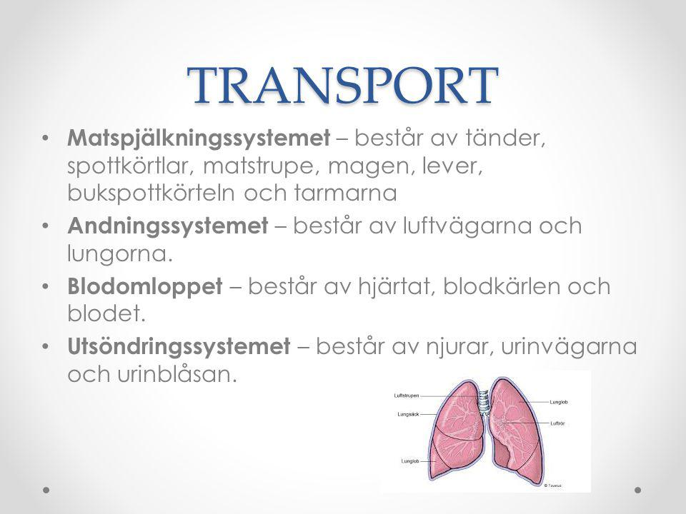TRANSPORT Matspjälkningssystemet – består av tänder, spottkörtlar, matstrupe, magen, lever, bukspottkörteln och tarmarna Andningssystemet – består av