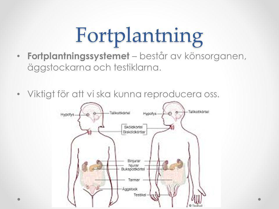 Fortplantning Fortplantningssystemet – består av könsorganen, äggstockarna och testiklarna. Viktigt för att vi ska kunna reproducera oss.
