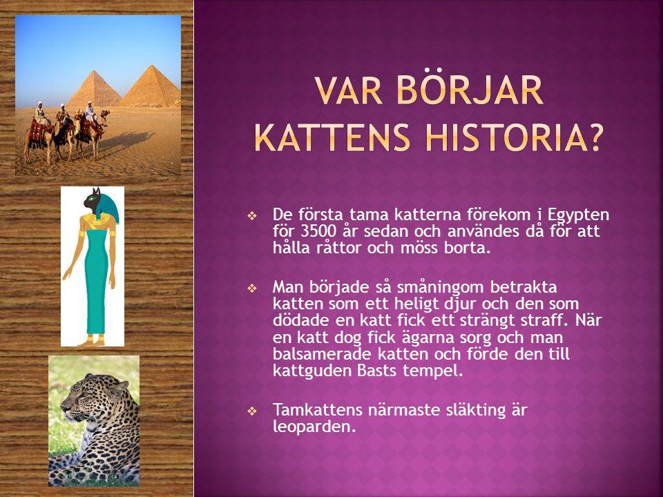  De första tama katterna förekom i Egypten för 3500 år sedan och användes då för att hålla råttor och möss borta.