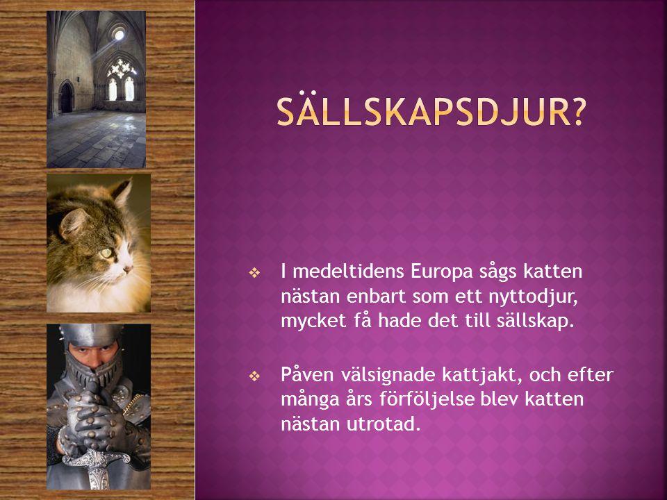  I medeltidens Europa sågs katten nästan enbart som ett nyttodjur, mycket få hade det till sällskap.
