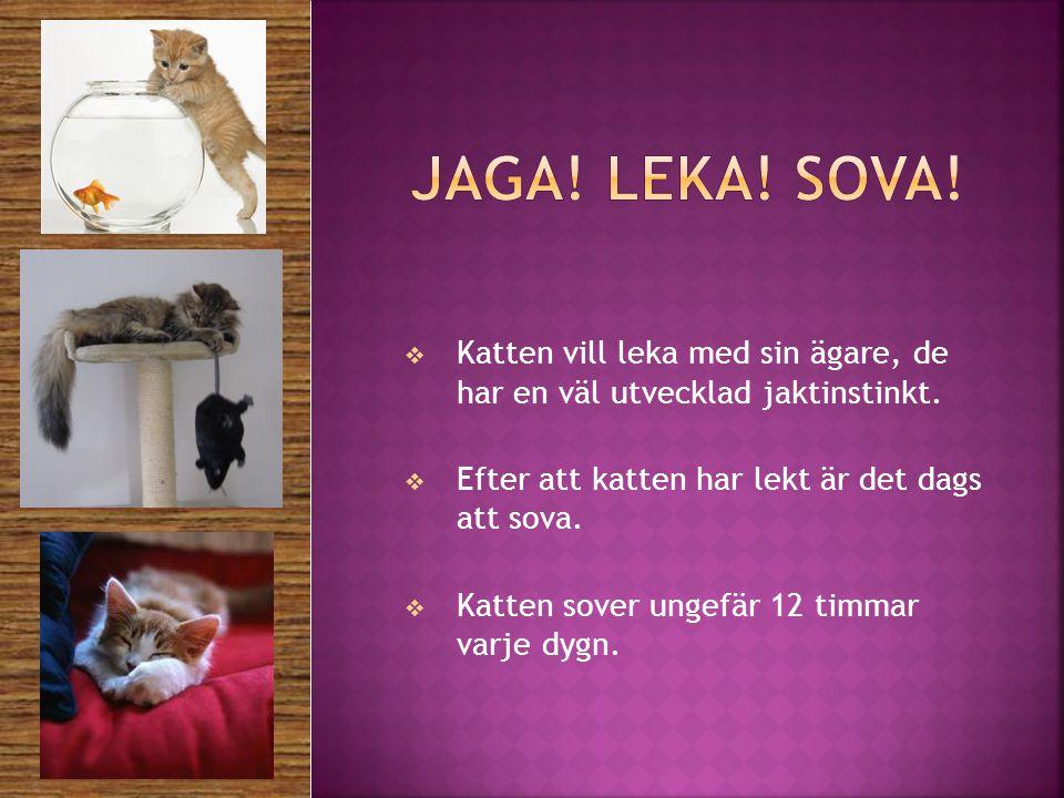  Katten vill leka med sin ägare, de har en väl utvecklad jaktinstinkt.