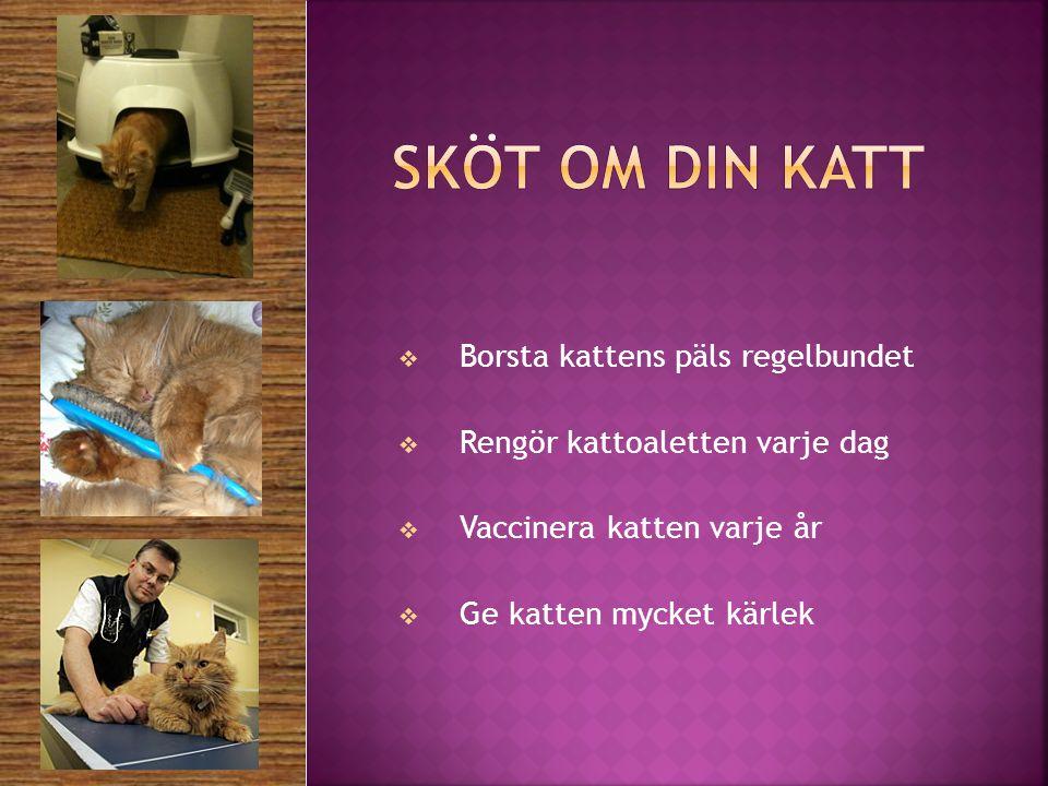  Borsta kattens päls regelbundet  Rengör kattoaletten varje dag  Vaccinera katten varje år  Ge katten mycket kärlek