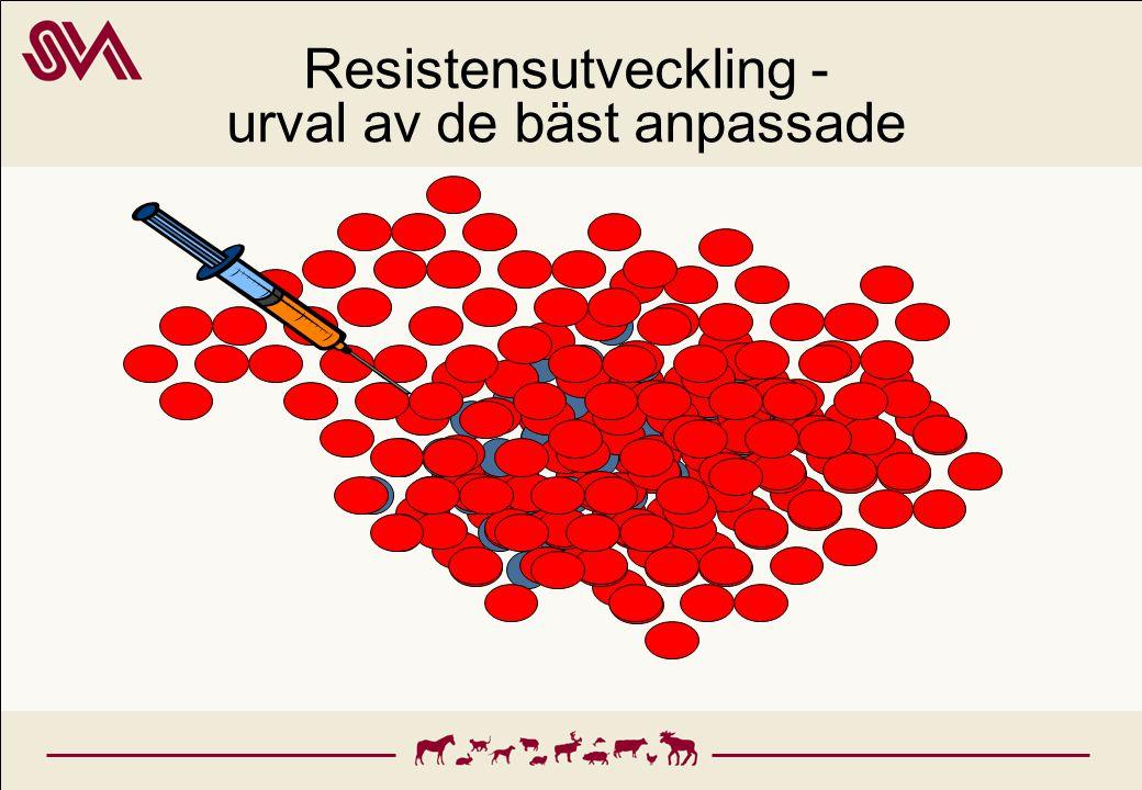 Resistensutveckling - urval av de bäst anpassade