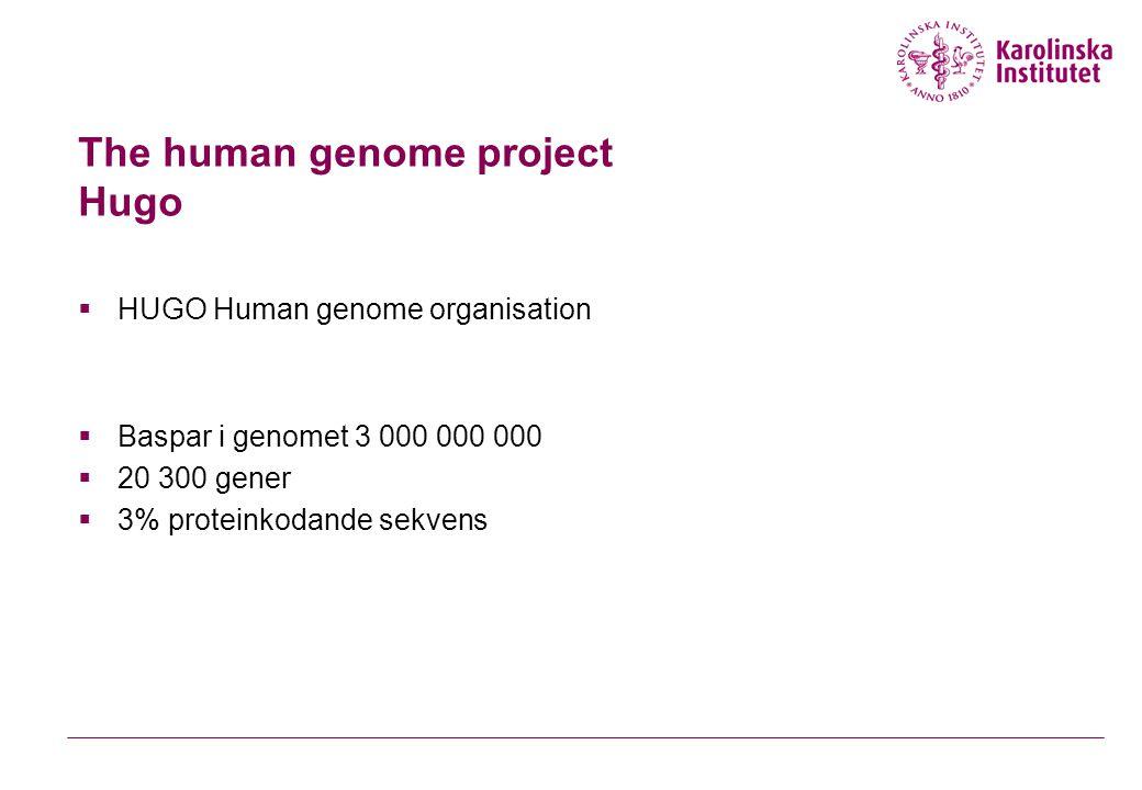 Genetisk kod