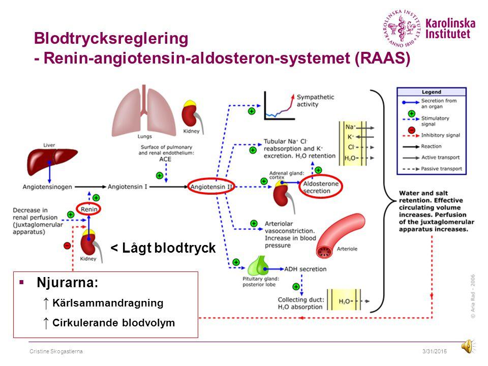 3/31/2015Cristine Skogastierna Blodtrycksreglering - Renin-angiotensin-aldosteron-systemet (RAAS) < Lågt blodtryck  Njurarna: ↑ Kärlsammandragning ↑ Cirkulerande blodvolym