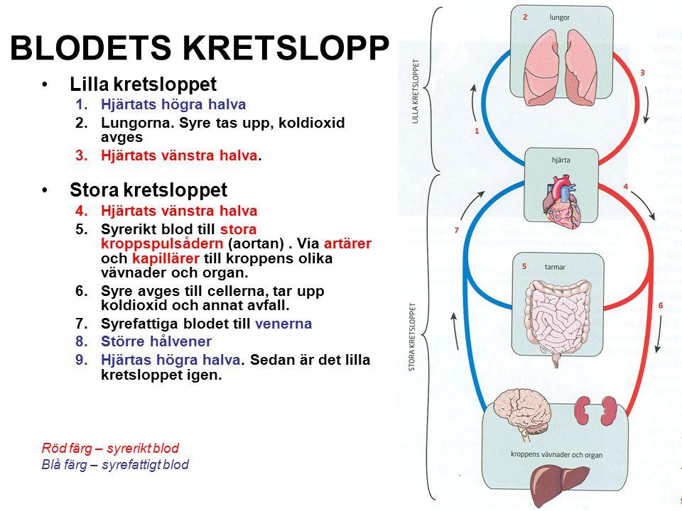 BLODKÄRLSYSTEMET Hjärta Artärer Transporterar syrerikt blod Vener Transporterar syrefattigt blod