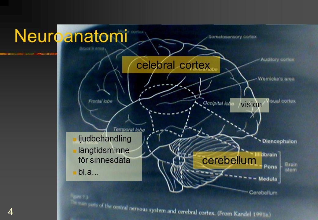 4 Neuroanatomi cerebellum celebral cortex vision ljudbehandling långtidsminne för sinnesdata bl.a...