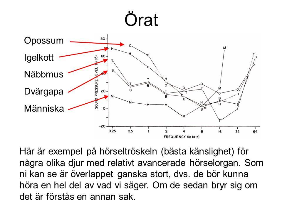 Örat Här är exempel på hörseltröskeln (bästa känslighet) för några olika djur med relativt avancerade hörselorgan. Som ni kan se är överlappet ganska