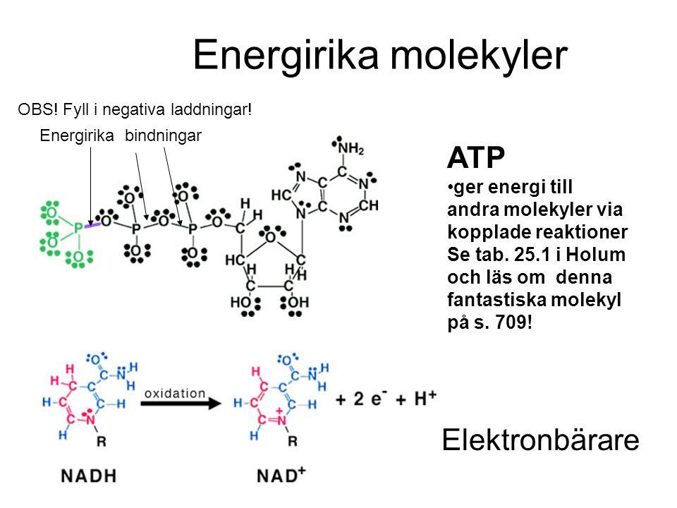 Energirika molekyler ATP ger energi till andra molekyler via kopplade reaktioner Se tab. 25.1 i Holum och läs om denna fantastiska molekyl på s. 709!