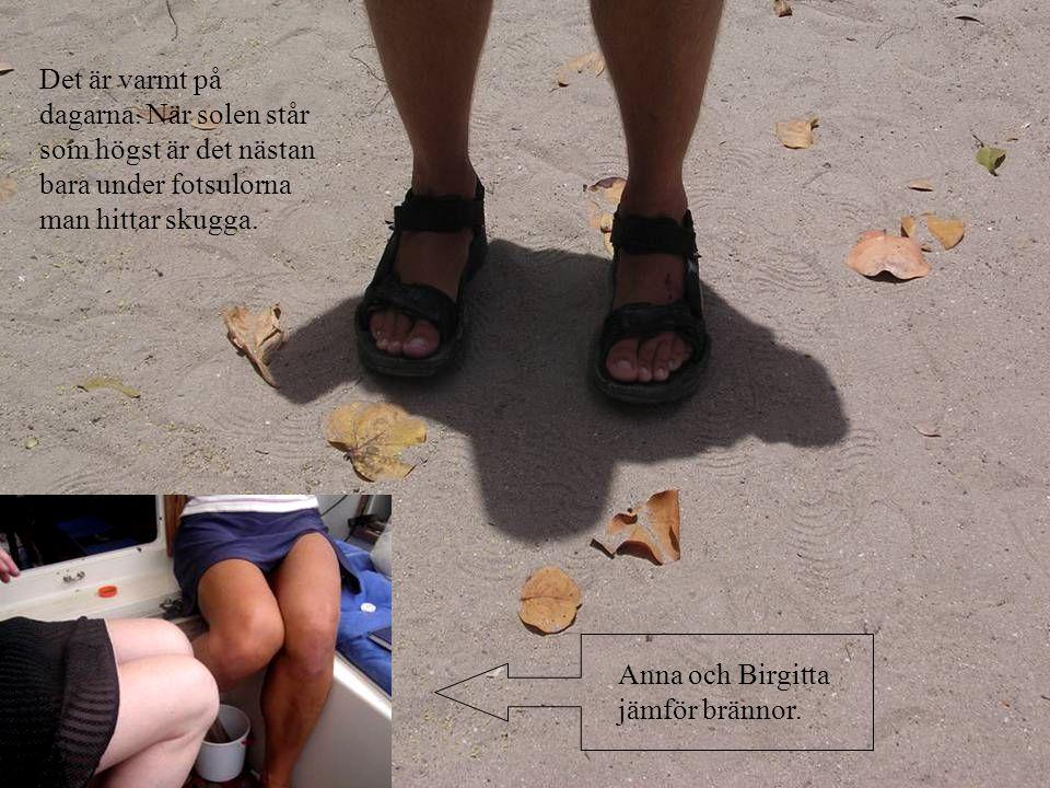 Det är varmt på dagarna. När solen står som högst är det nästan bara under fotsulorna man hittar skugga. Anna och Birgitta jämför brännor.