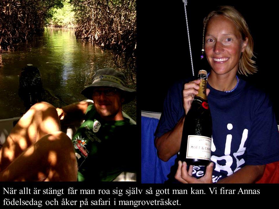 När allt är stängt får man roa sig själv så gott man kan. Vi firar Annas födelsedag och åker på safari i mangroveträsket.