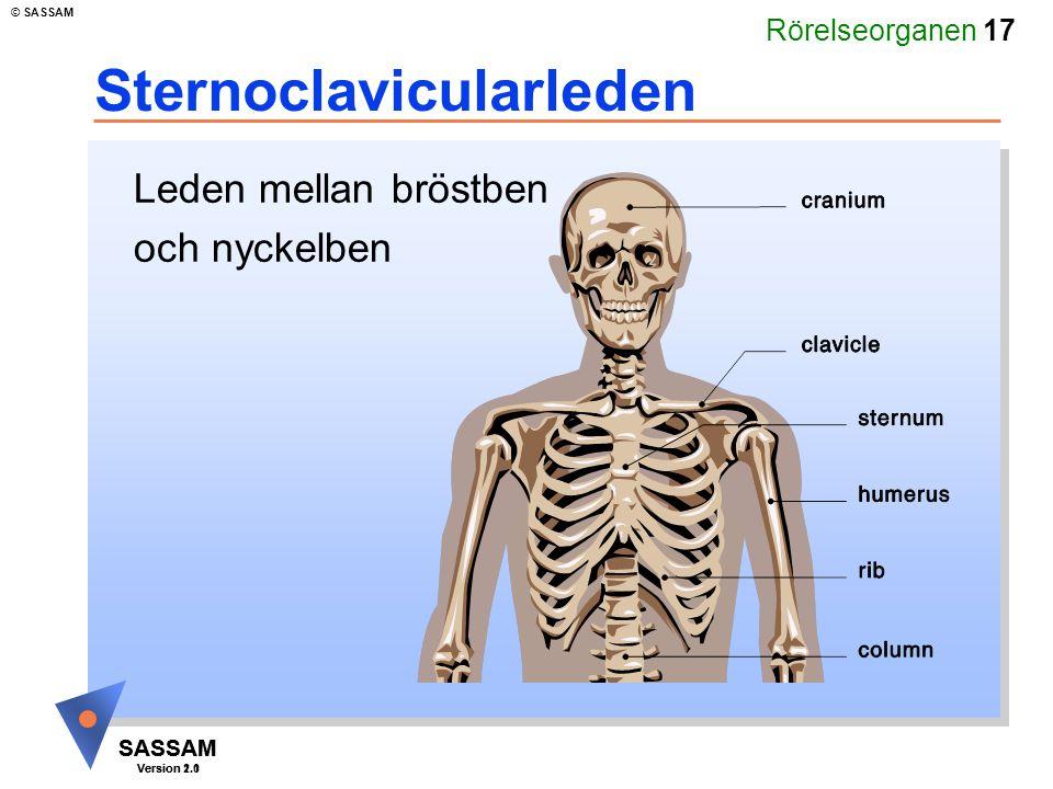 Rörelseorganen 17 SASSAM Version 1.1 © SASSAM SASSAM Version 2.0 Sternoclavicularleden Leden mellan bröstben och nyckelben