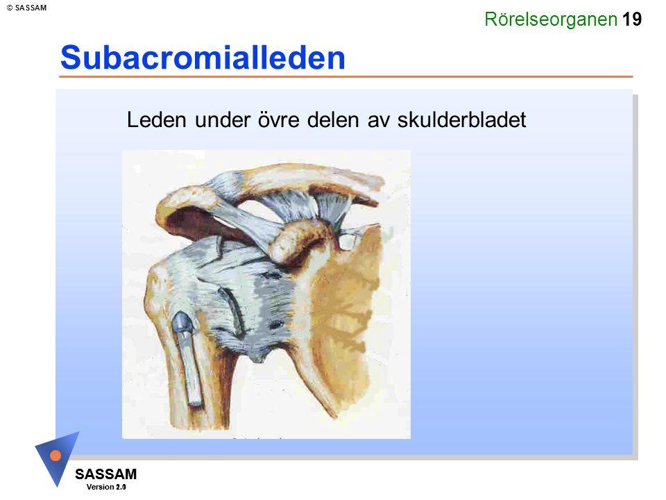 Rörelseorganen 19 SASSAM Version 1.1 © SASSAM SASSAM Version 2.0 Subacromialleden Leden under övre delen av skulderbladet