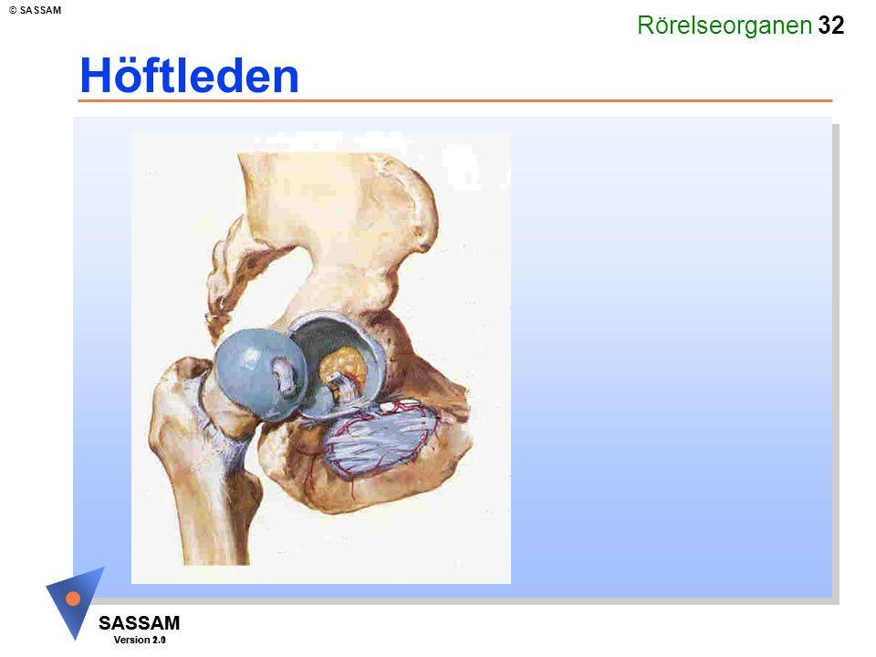 Rörelseorganen 32 SASSAM Version 1.1 © SASSAM SASSAM Version 2.0 Höftleden