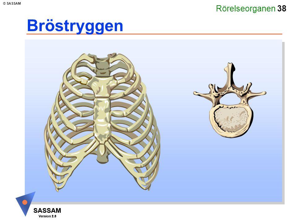 Rörelseorganen 38 SASSAM Version 1.1 © SASSAM SASSAM Version 2.0 Bröstryggen