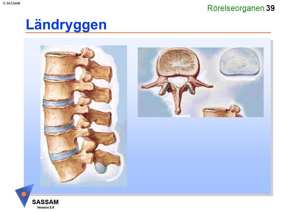 Rörelseorganen 39 SASSAM Version 1.1 © SASSAM SASSAM Version 2.0 Ländryggen