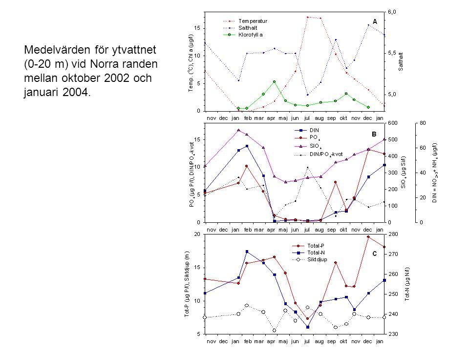 Medelvärden för ytvattnet (0-20 m) vid Norra randen mellan oktober 2002 och januari 2004.