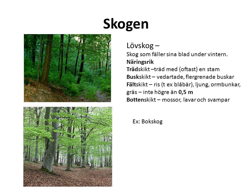 Skogen Lövskog – Skog som fäller sina blad under vintern. Näringsrik Trädskikt –träd med (oftast) en stam Buskskikt – vedartade, flergrenade buskar Fä