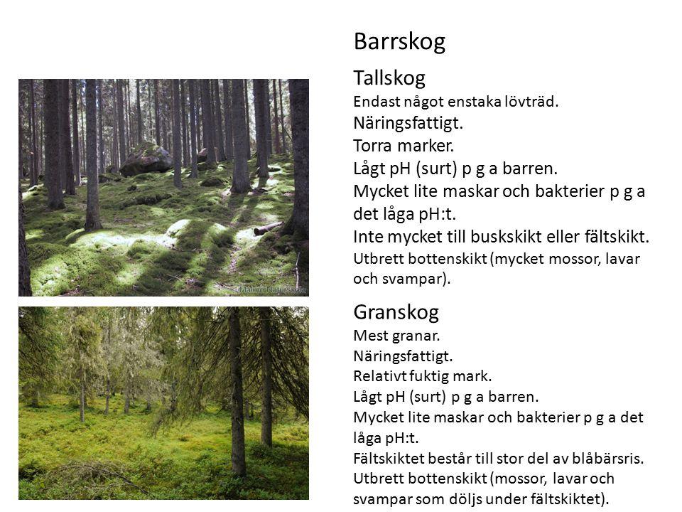 Tallskog Endast något enstaka lövträd.Näringsfattigt.