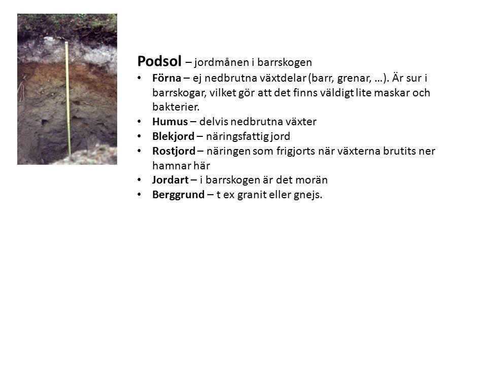 Podsol – jordmånen i barrskogen Förna – ej nedbrutna växtdelar (barr, grenar, …). Är sur i barrskogar, vilket gör att det finns väldigt lite maskar oc