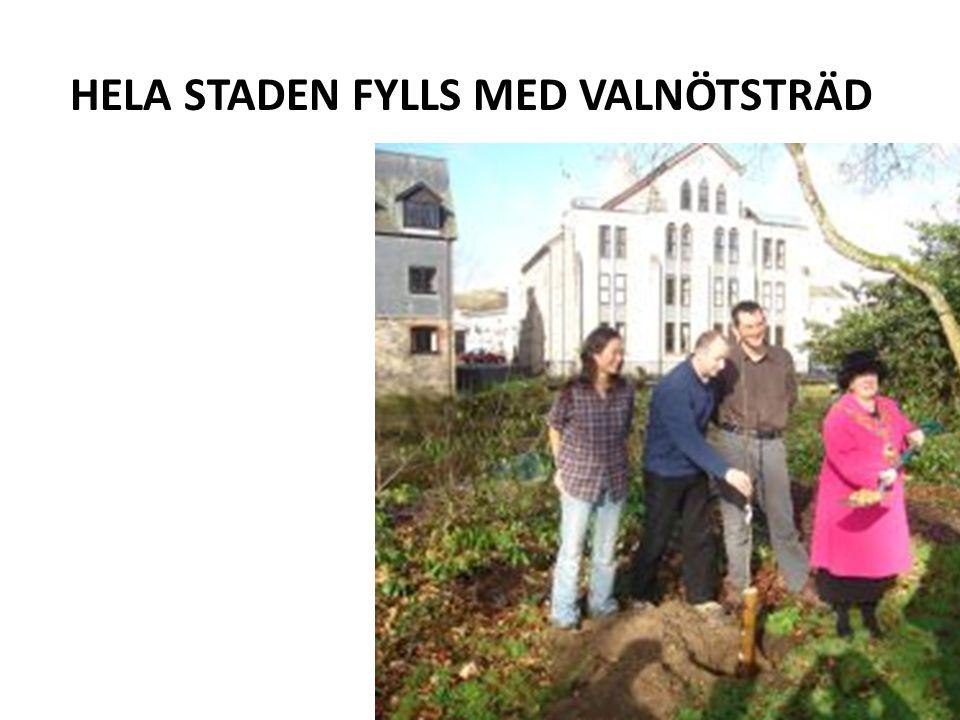 HELA STADEN FYLLS MED VALNÖTSTRÄD
